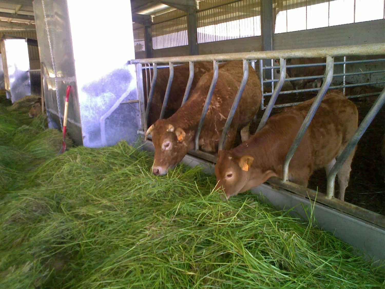Instalación de equipamiento ganadero en granja de vacas de carne