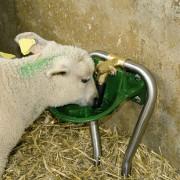 Babylab_T-situ-agneau-web
