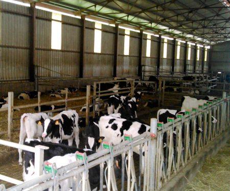Instalación para vacuno de leche Etxe Holz