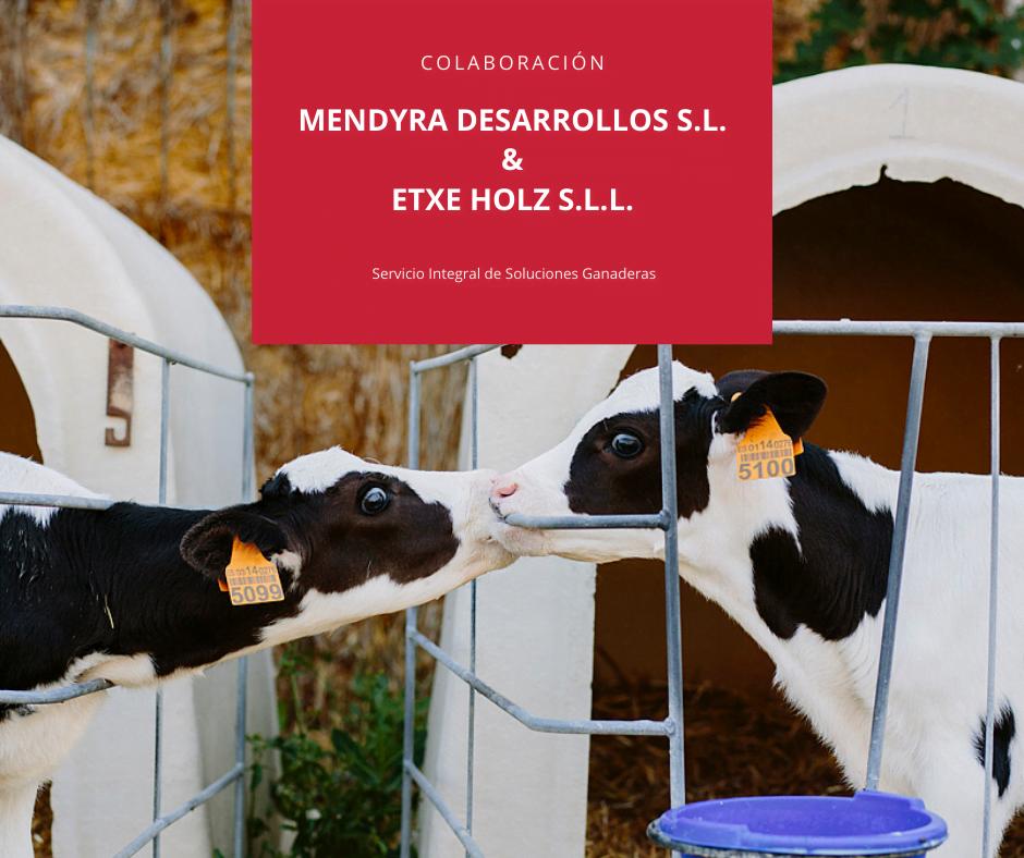 Colaboración entre Mendyra Desarrollos y Etxe Holz