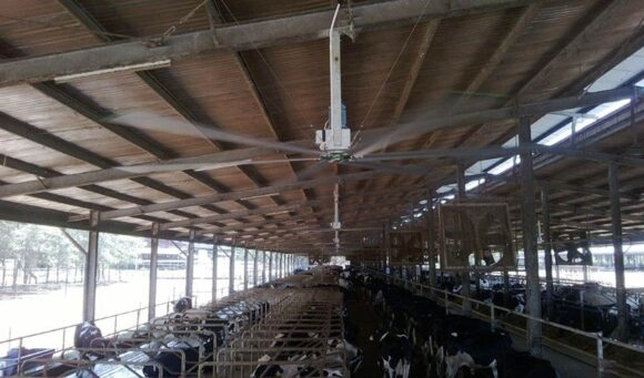 Ventiladores de techo de grandes dimensiones para granjas