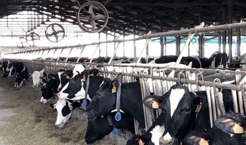 Ventiladores para granjas
